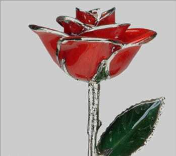 Red and Platinum Trimmed Rose – $65