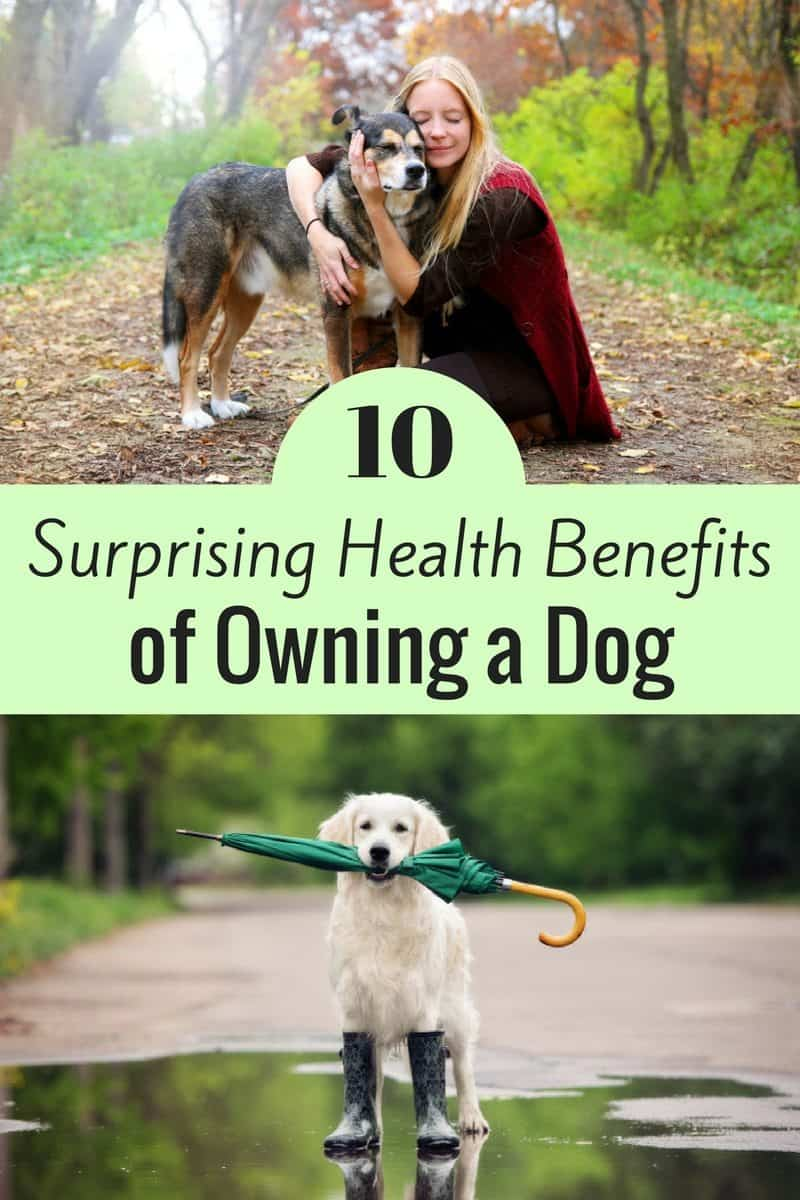 Dog owners will tell you that having a dog enriches your life in several ways, but did you know that owning a dog actually has several health benefits also?