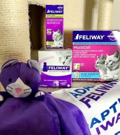 As cat owners we do everything that we can for our pets. Read on to find out how Feliway® and Catego™ can help to keep your cats happy and healthy.