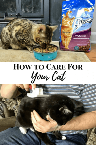 Need some help on how to care for your cat? Follow these essential cat care tips and your cat will be looking and feeling great!