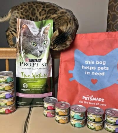 Benefits of Feeding Your Cat a Grain-Free Cat Food