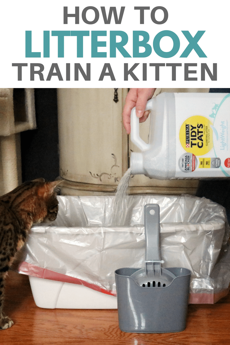 With some basic knowledge of how to litterbox train a kitten you can set yourself, and your new cat, up for litterbox success. #TidyTreatment
