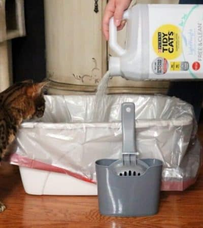 How to Litterbox Train a Kitten