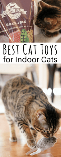 Play is especially important for indoor cats who don't get to go outside and get the exercise that they would if they lived outdoors. Learn more about 3 of the best types of cat toys for indoor cats! From interactive cat toys that will help develop a bond between you and your cat, to electronic cat toys that will keep your indoor cat active while you are at work, you are sure to find some great toy options for your cat.